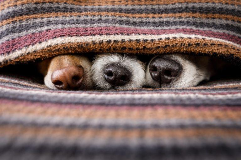 Wolf's Best Silvester mit Hund