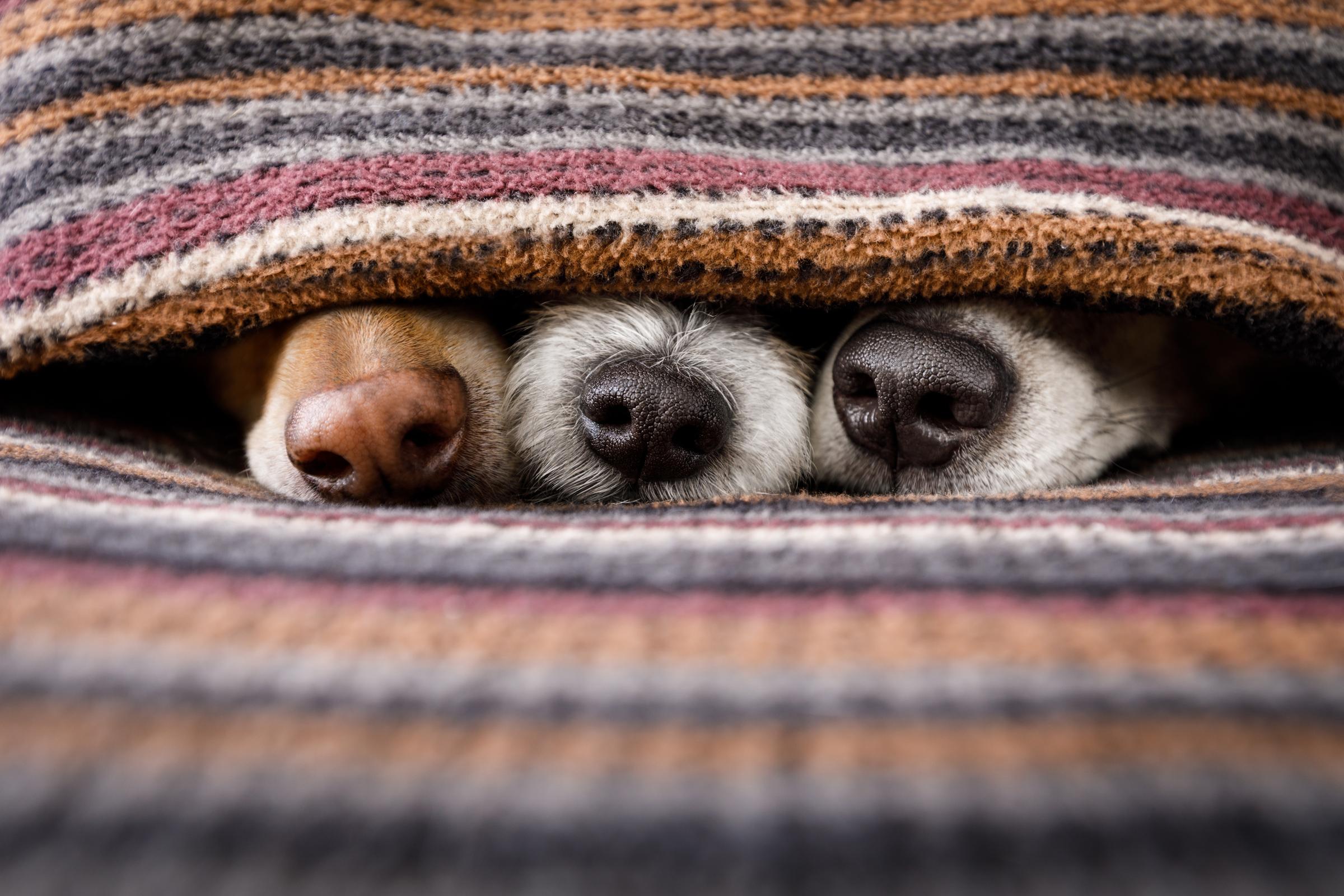 Read more about the article Tipps für einen entspannten Silvester mit Hund