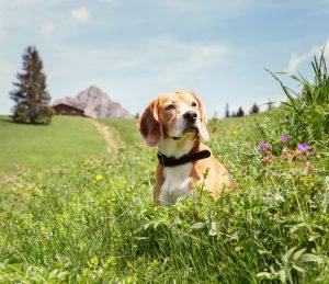 Hund in Wiese Urlaub mit Hund
