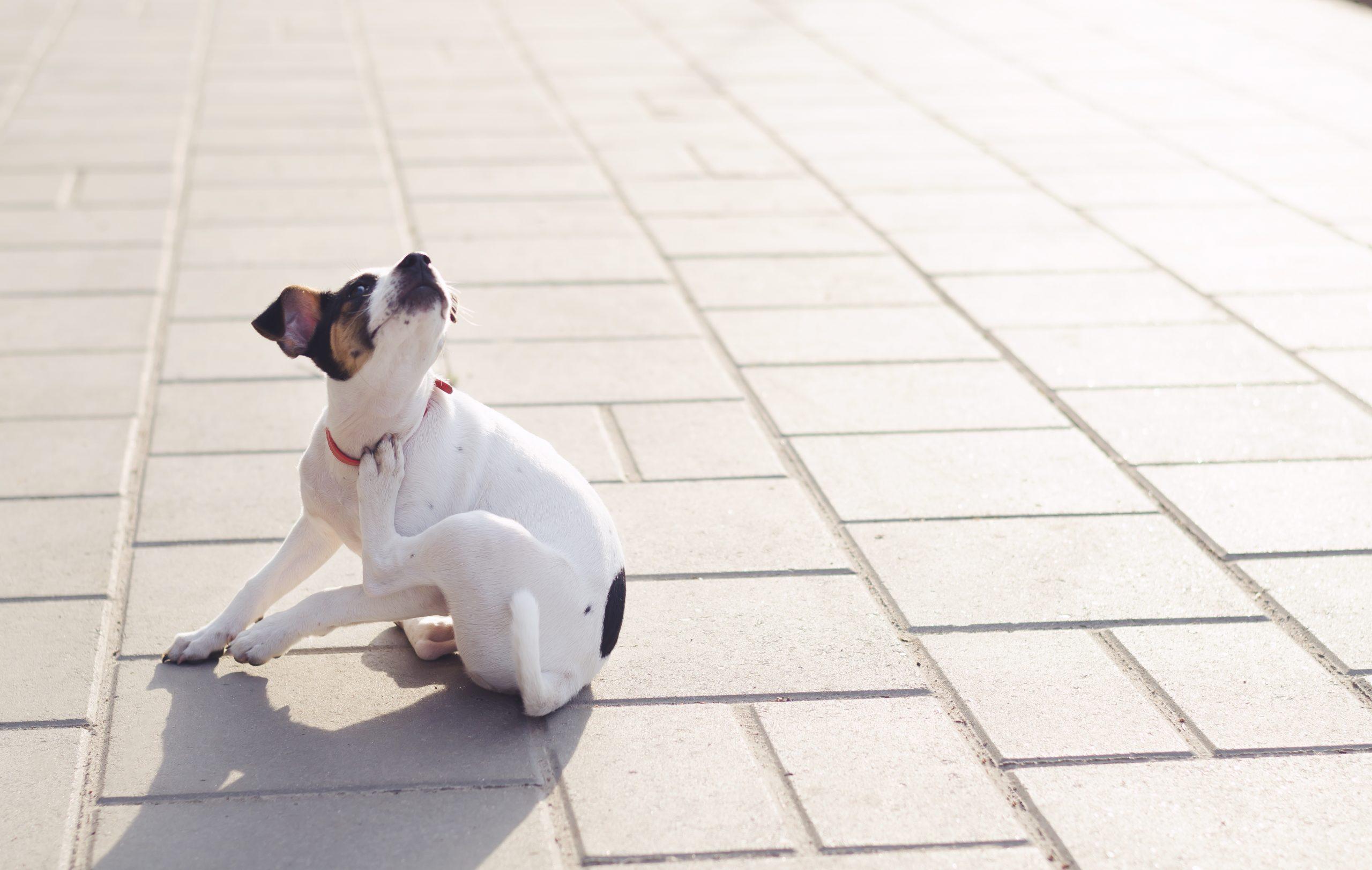 Read more about the article Parasiten bei Hunden – klein aber sehr lästig!